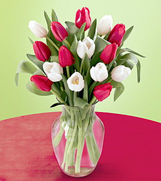 15 Red & White Tulips with Vase