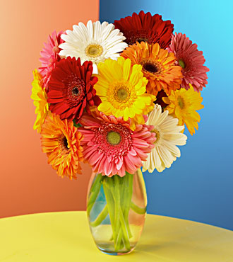 12 Mix Gerbera with Vase